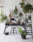 FEEL | 4x Luchtzuiverende planten