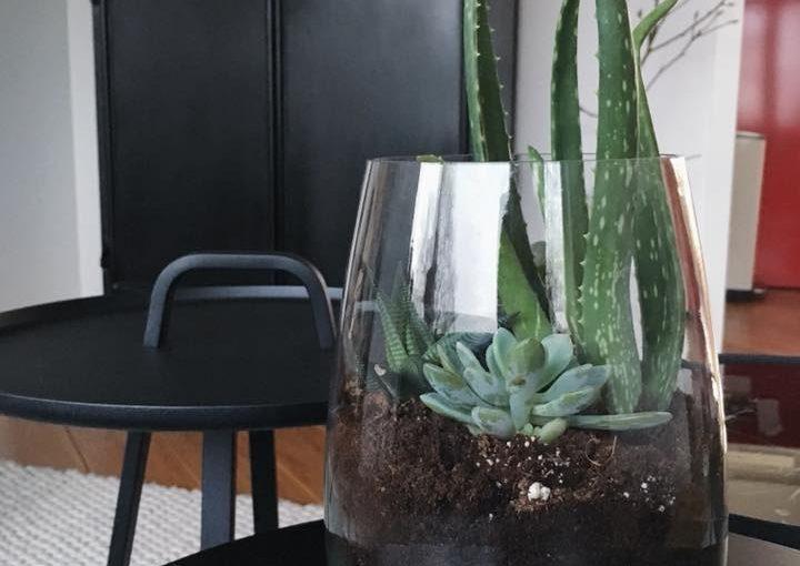 DO | Maak je eigen planten terrarium