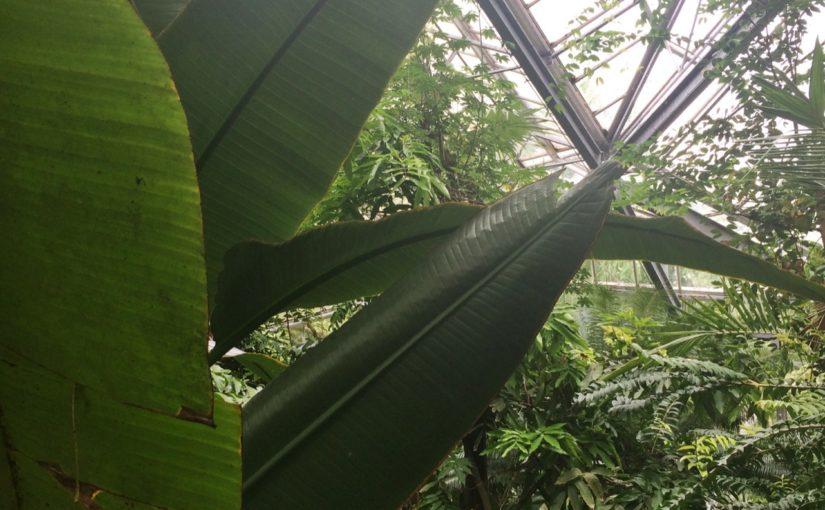 INSPIRE | 5 PLANTEN VOOR MENSEN ZÓNDER GROENE VINGERS