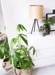 INSPIRE | Planten in de slaapkamer