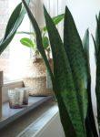 INSPIRE | Hoe groen is jouw huis?